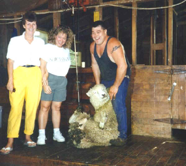 Sheep_Shearing.jpg (53919 bytes)